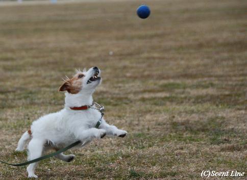 ボール遊び大好き_c0099133_1184431.jpg