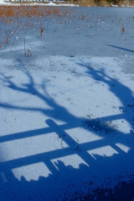 秋田千秋公園冬の朝_f0050534_1133454.jpg