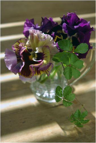 アンティークガラスに三色菫を挿して_f0012154_1262862.jpg