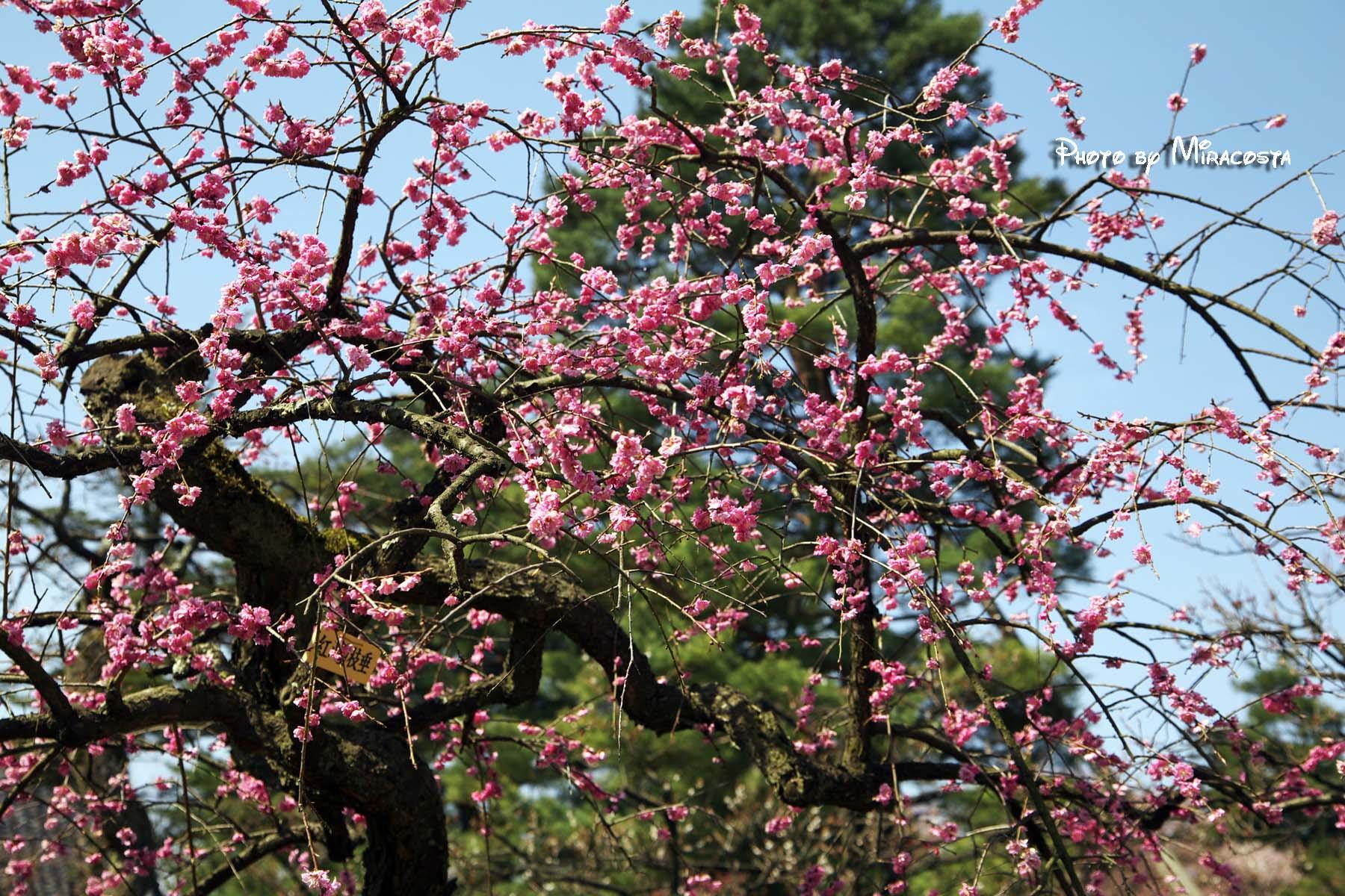 春よ来い・・。_e0140159_18405448.jpg