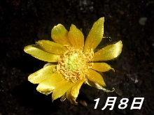 b0067569_15425169.jpg