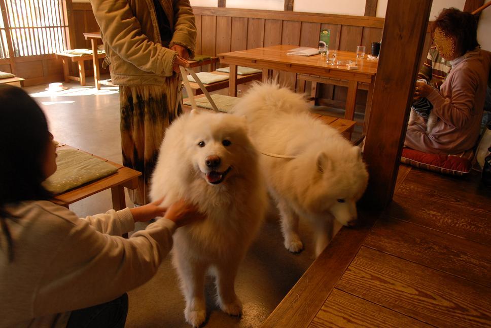 ドッグカフェに行ってきました。_a0049296_19124682.jpg