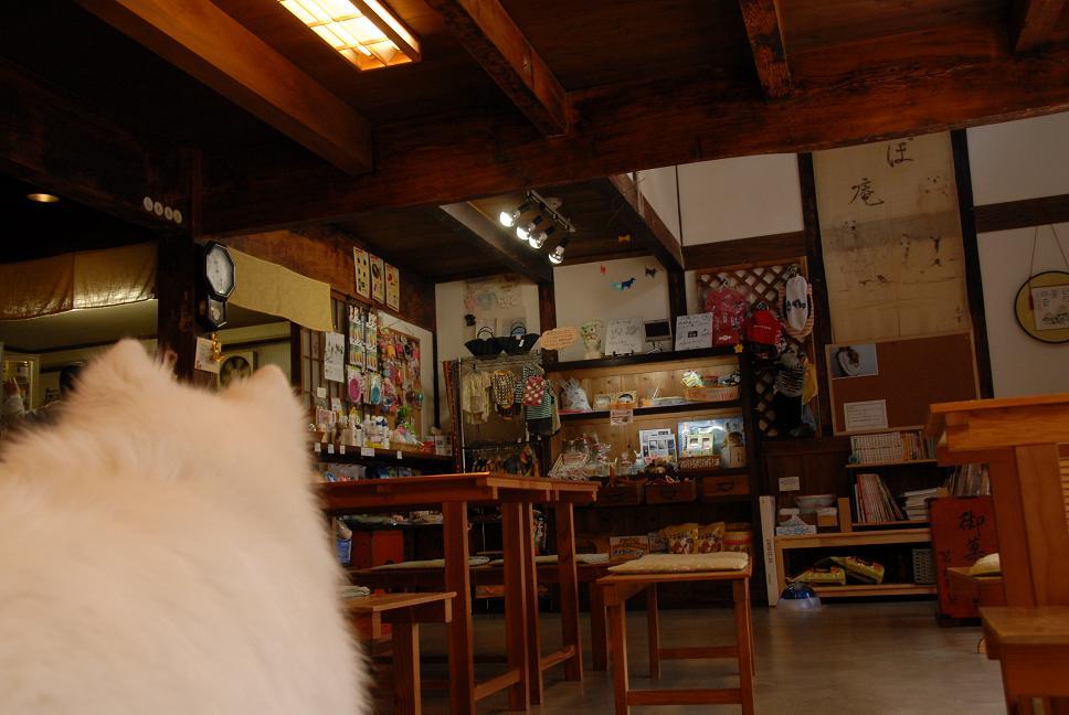 ドッグカフェに行ってきました。_a0049296_19131725.jpg