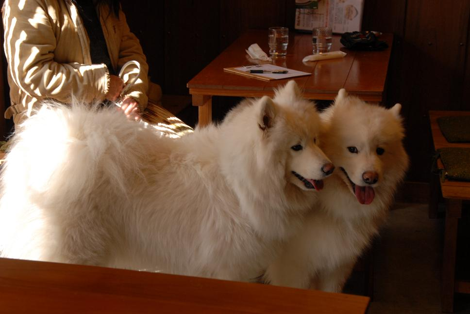 ドッグカフェに行ってきました。_a0049296_1913392.jpg