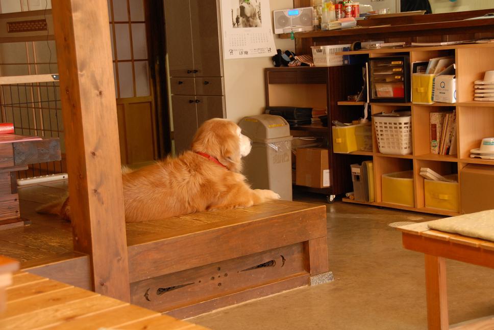 ドッグカフェに行ってきました。_a0049296_19165827.jpg