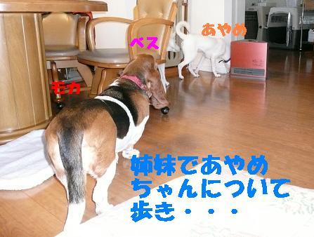 f0121712_1824328.jpg