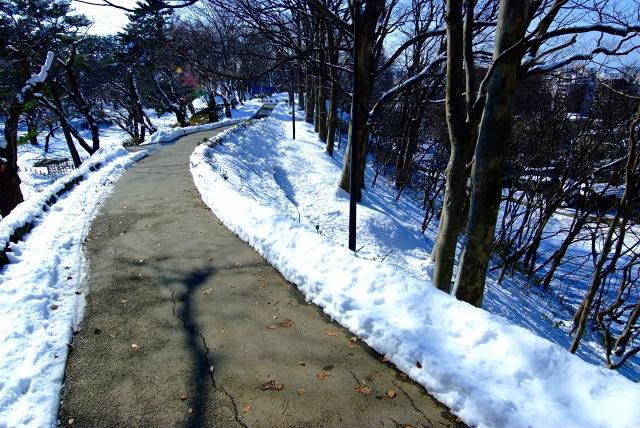 秋田千秋公園冬景色_f0050534_8145282.jpg