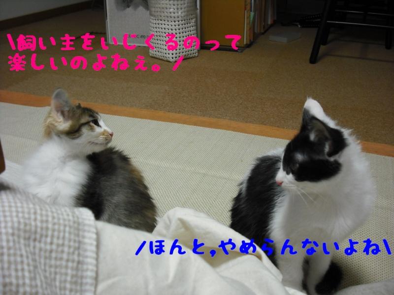 c0181639_0515383.jpg