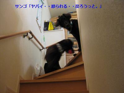 b0148945_13241013.jpg