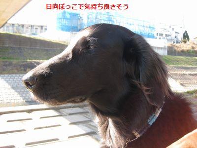 b0148945_13302734.jpg