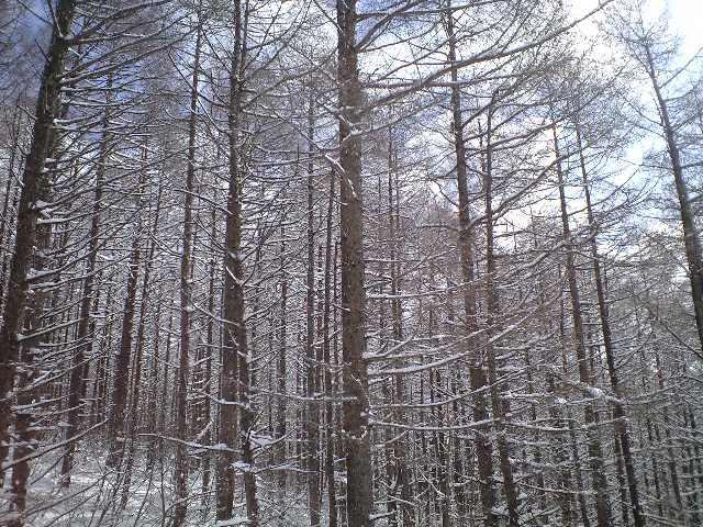 今日はアルツ磐梯スキー場_c0151965_17352164.jpg