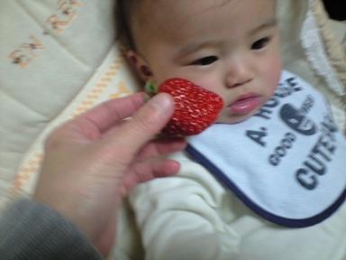 でっかい苺 紅ほっぺ~♪_e0123286_18495543.jpg