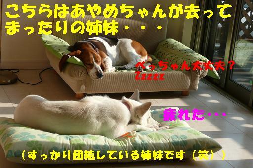 f0121712_22553515.jpg