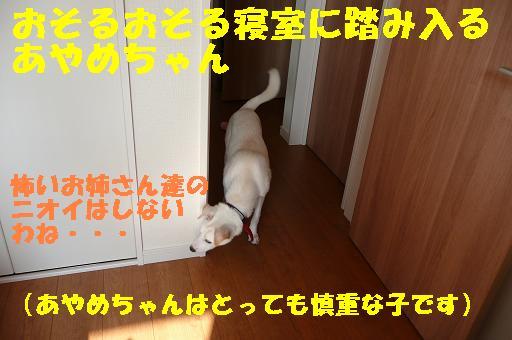 f0121712_23234222.jpg