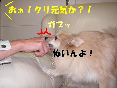 c0179136_173518.jpg