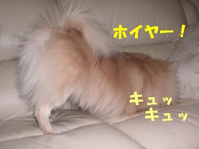 c0179136_175116.jpg