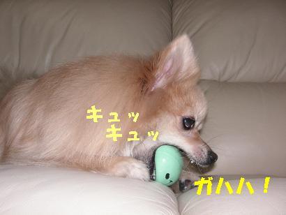 c0179136_18593.jpg