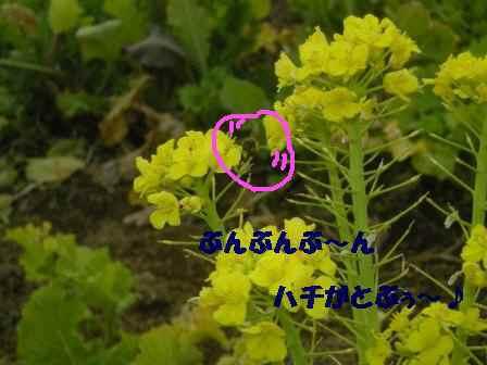 f0142953_21533584.jpg