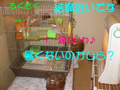 b0158061_2131647.jpg