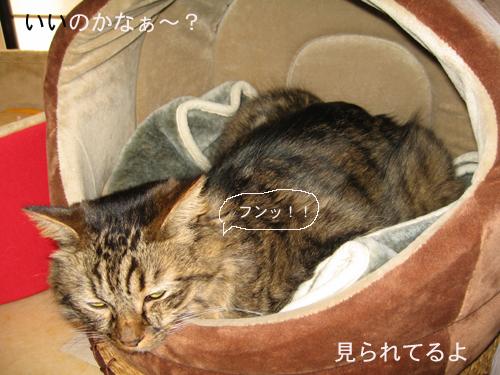 e0057361_1952556.jpg