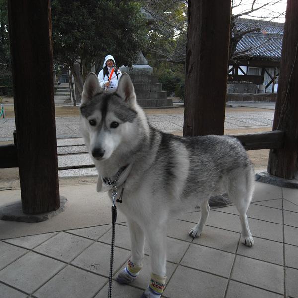 12月11日 おへんろ31日め♪ by GX100_c0049299_18391588.jpg