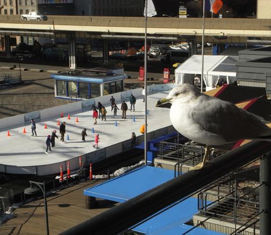 サウス・ストリート・シーポートにスケートリンク登場 Seaport Ice_b0007805_11453473.jpg