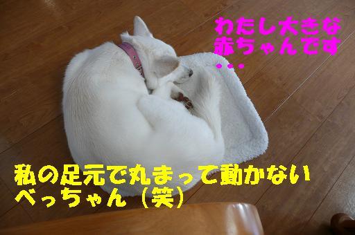 f0121712_05594.jpg