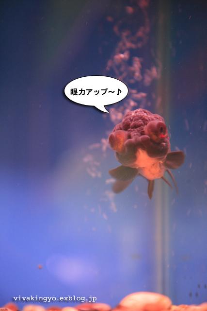 f0118214_9534561.jpg