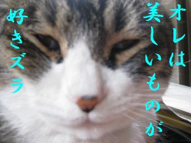 b0151748_12482032.jpg