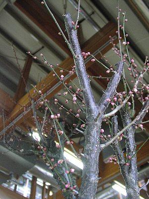 春の花まつり_c0141652_133506.jpg