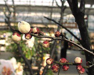 春の花まつり_c0141652_134316.jpg