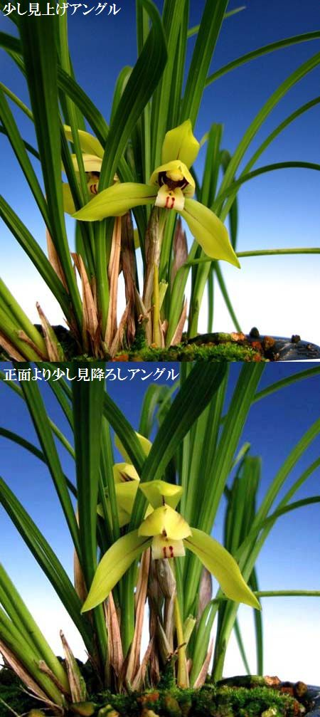 立っっ春ぅ~ん!!!,、。                No.495_d0103457_025061.jpg