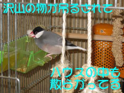 b0158061_20521723.jpg