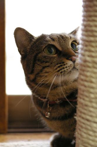 猫は、5日経てばすっかりわすれる_a0064067_2220013.jpg