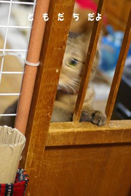 猫は、5日経てばすっかりわすれる_a0064067_22203540.jpg