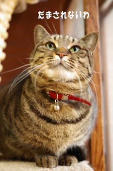 猫は、5日経てばすっかりわすれる_a0064067_22231474.jpg