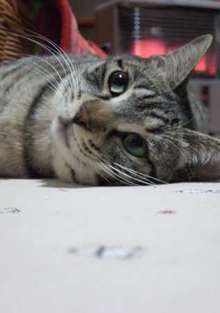 猫は、5日経てばすっかりわすれる_a0064067_229825.jpg