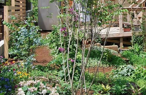 ユーカリの木 移植計画_c0124100_1336137.jpg