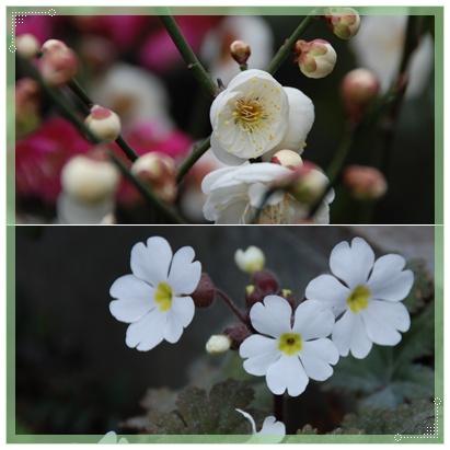 庭にも春の兆し_c0051105_220536.jpg