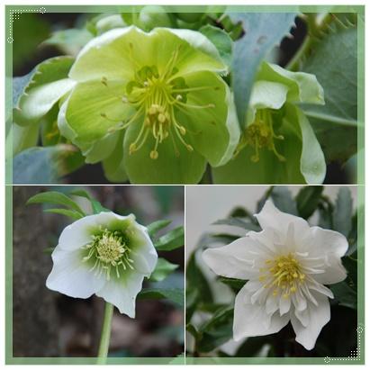 庭にも春の兆し_c0051105_22112964.jpg