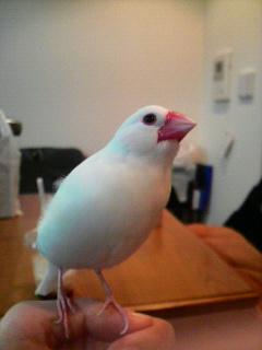 鳥のまぶた_f0178313_1172487.jpg