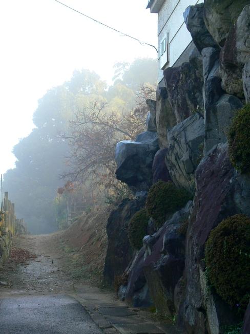 「京都・大亀谷・霧の朝」_d0133024_1013472.jpg