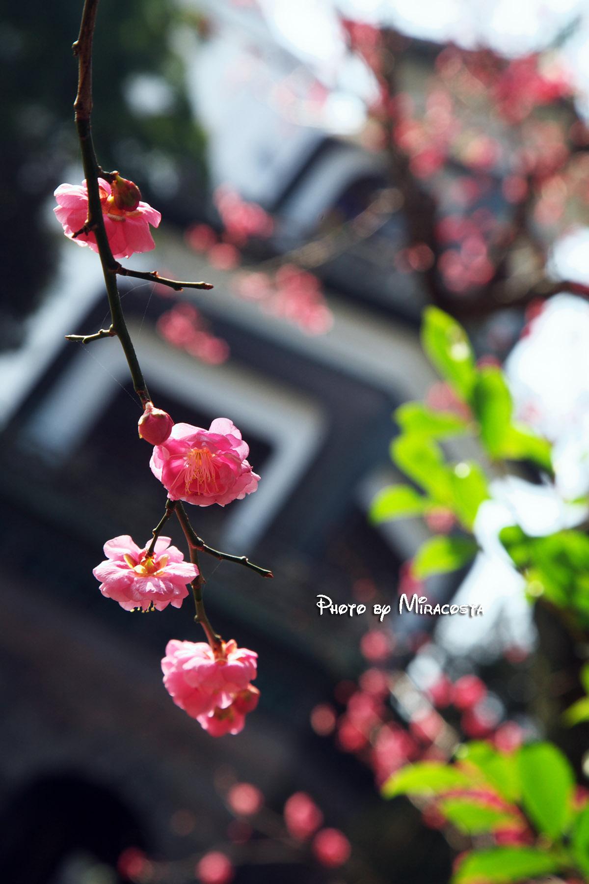 春が見えてきた!?_e0140159_1902232.jpg