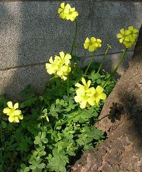 もうすぐ春よ_f0139963_719316.jpg