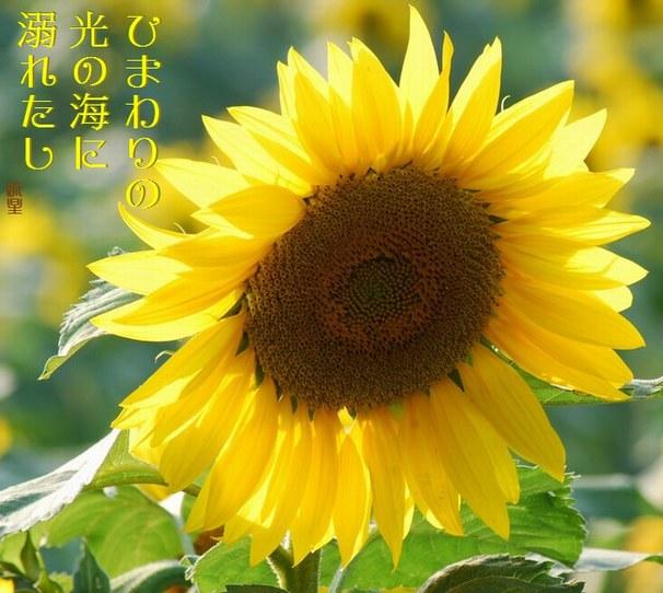 f0053297_8415367.jpg