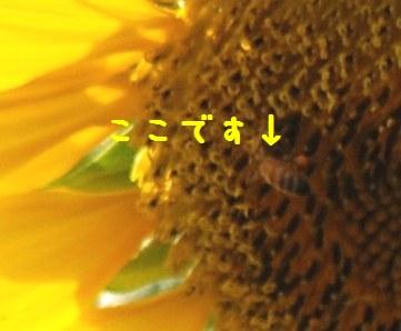 f0053297_8422530.jpg