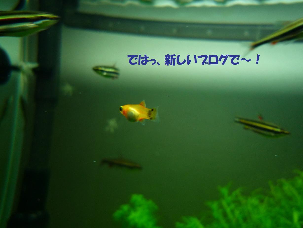 b0137599_18505955.jpg