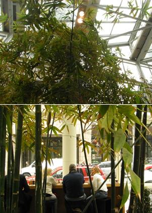 ミッドタウンにある真冬でも竹林とスズメを楽しめる室内空間_b0007805_1440216.jpg