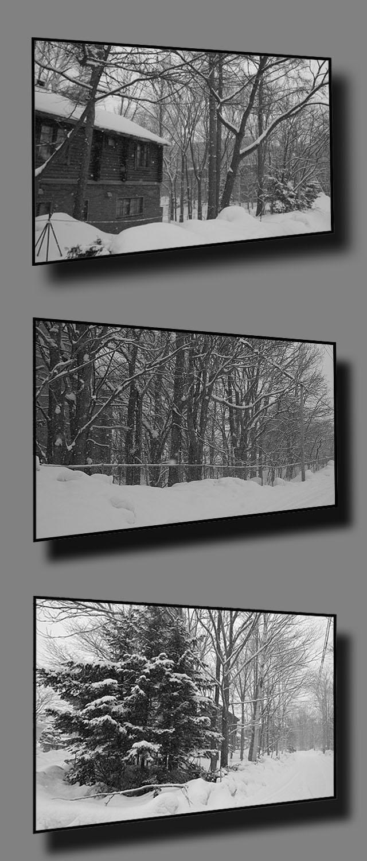 雪降りの一日_b0019313_17222037.jpg
