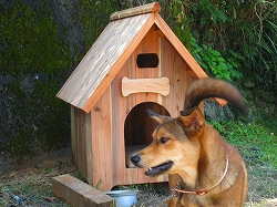 高級犬小屋?_e0002820_20431332.jpg